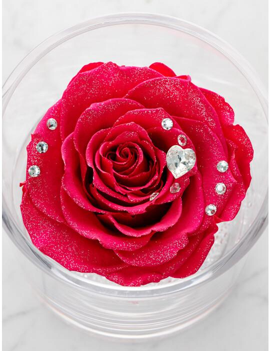 TimelessRose (Hot Pink) クリアベース 1輪
