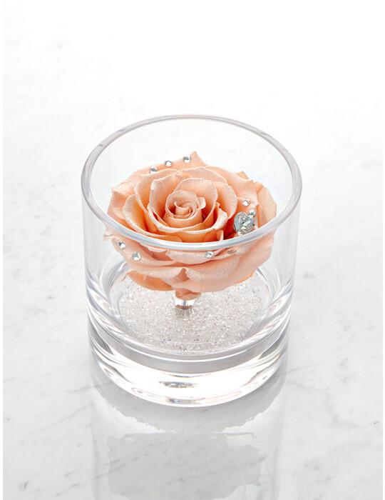 TimelessRose (Peach Pink) クリアベース 1輪